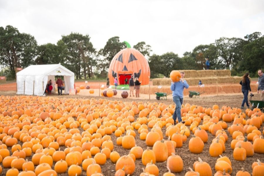 A pumpkin patch can be more than just ground to grow pumpkins on