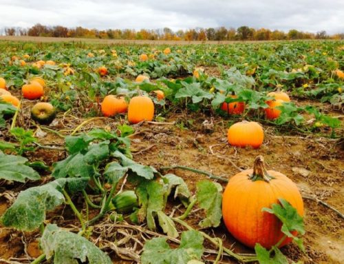 125 of the Cutest Pumpkin Patch Business Name Ideas Ever