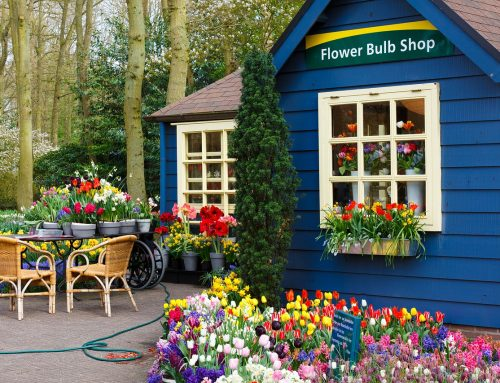 150 All-time Greatest Flower Shop Marketing Slogans and Taglines to Consider