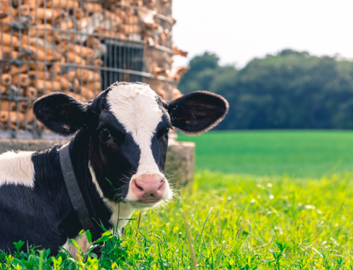 88 Hand-Picked Dairy Farm Name Ideas You Can Use