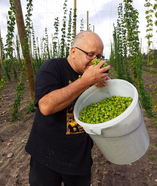 fresh hops
