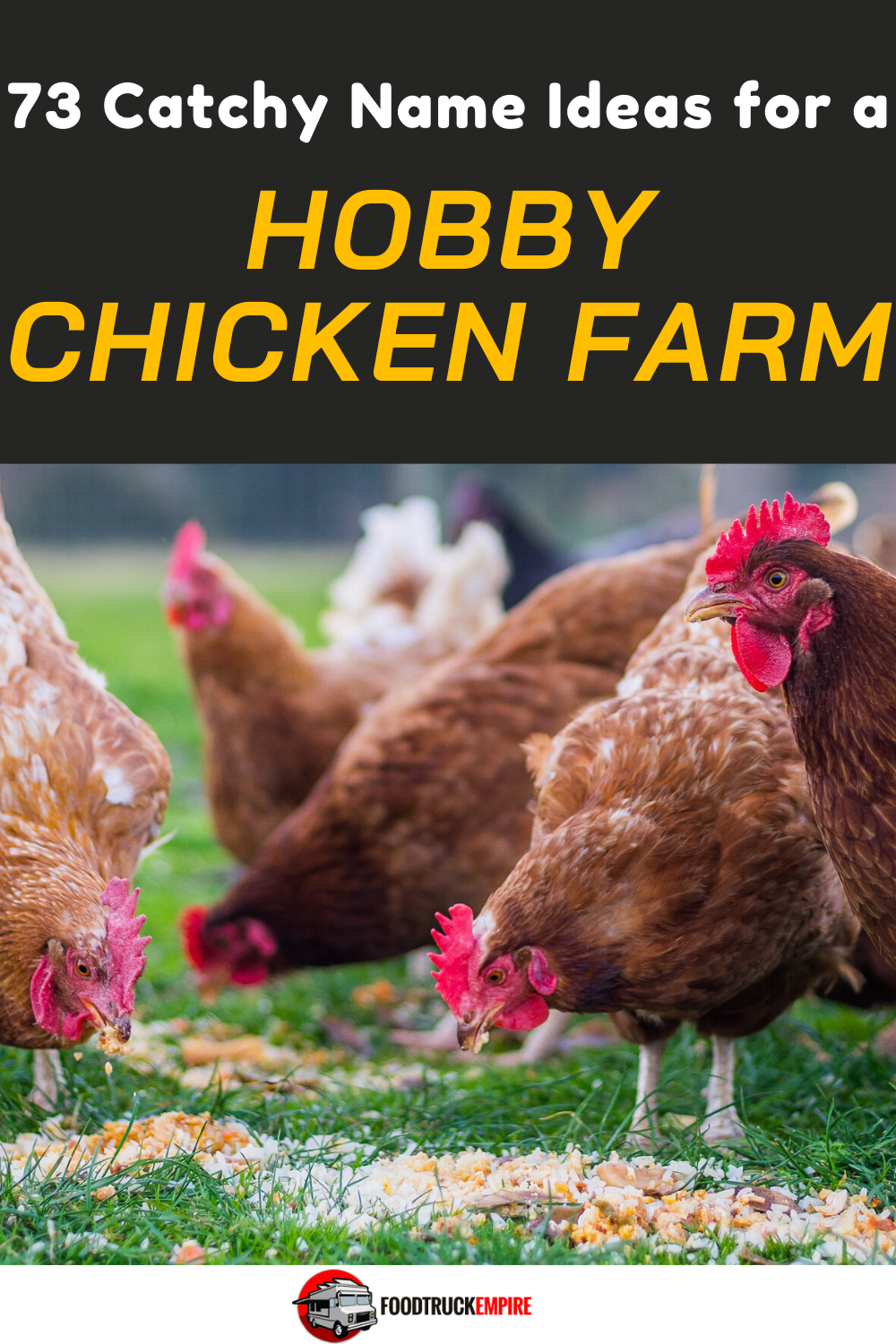 73 Catchy Name Ideas for a Hobby Chicken Farm