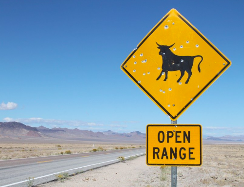 21 Incredible Open-Range Cattle Industry Statistics