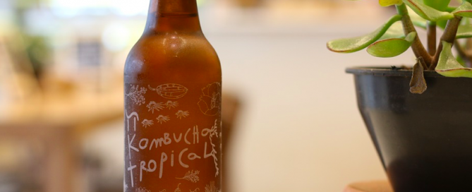 tropical kombucha